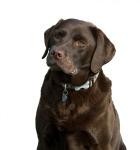 dog-220381_1280